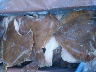 Камбала без головы 200-300 гр.