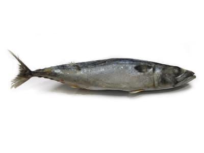 Скумбрия 400-600
